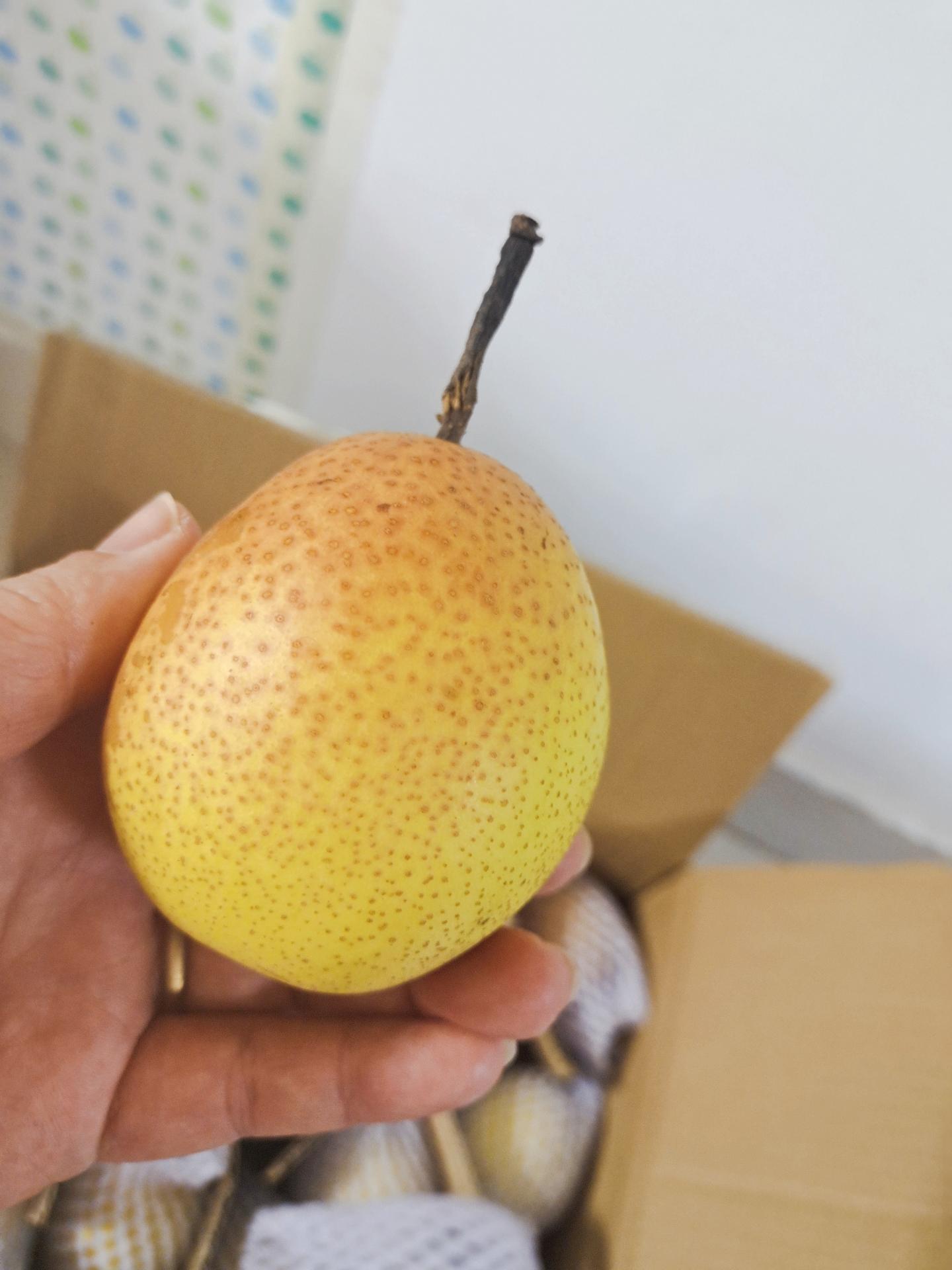 新鲜正宗脆甜多汁红香梨当季水果批发