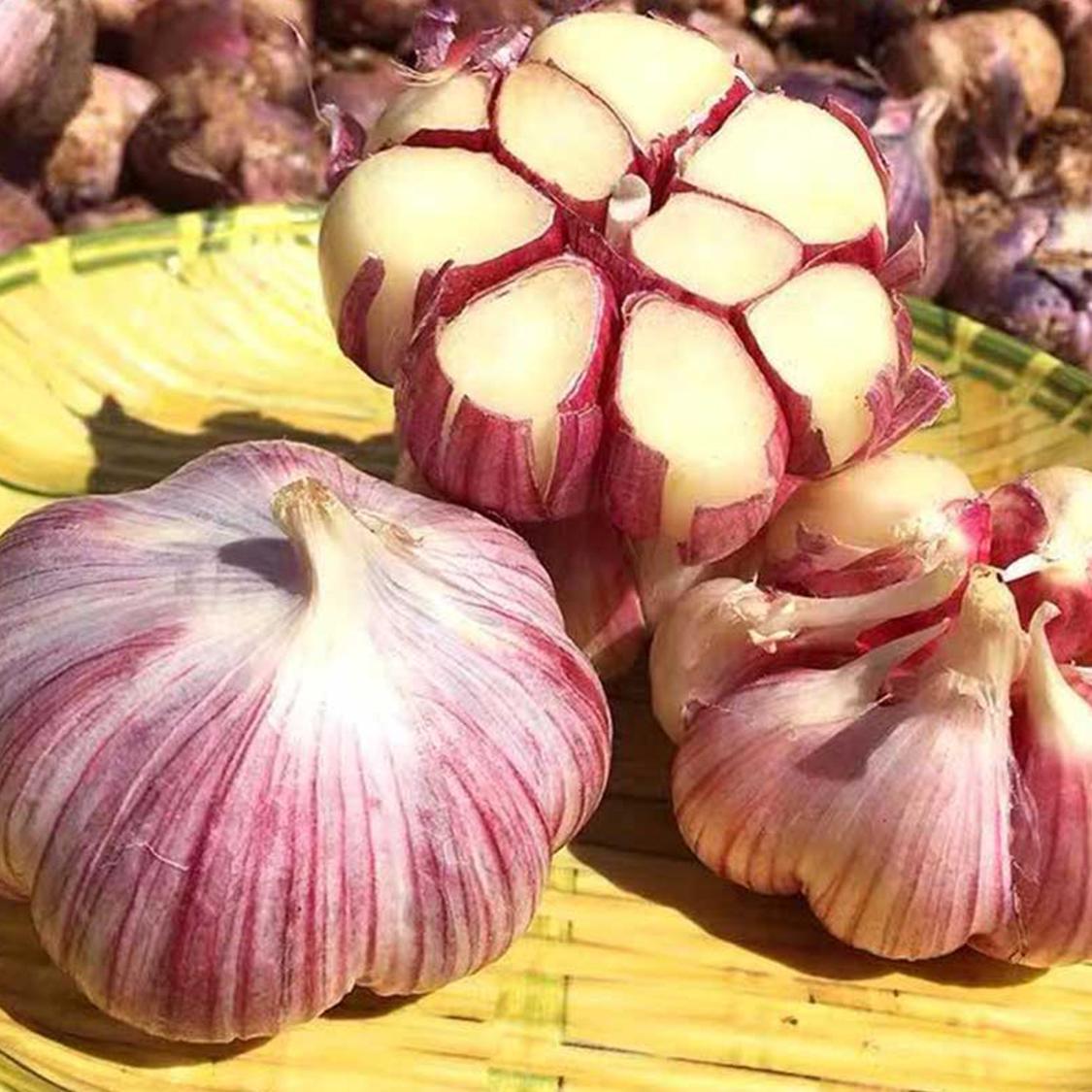 云南现挖紫皮多瓣蒜湿大蒜