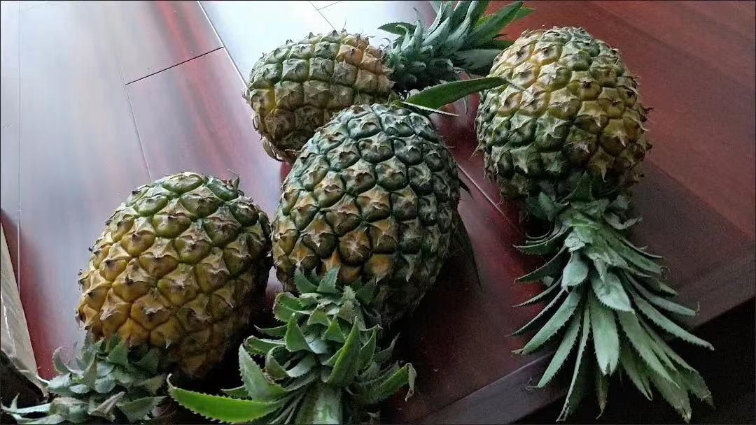云南香水菠萝小菠萝新鲜应季水果整箱现摘