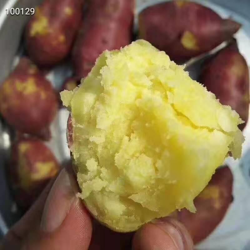 【现挖发货】海南澄迈沙地桥头板栗薯