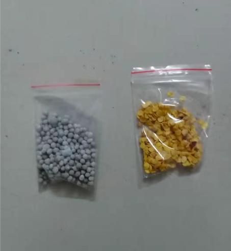 金品螺丝椒种子100粒