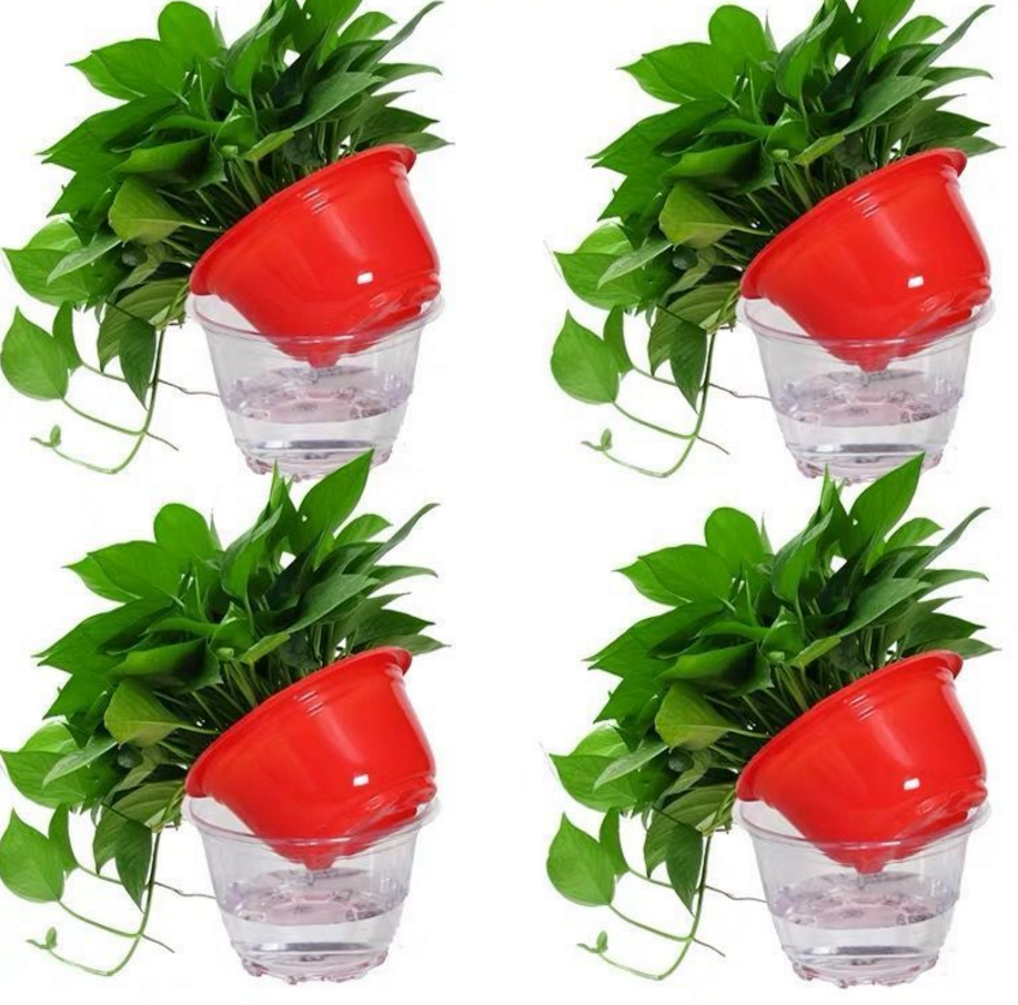 绿萝盆栽大叶绿箩植物吊兰吸除甲醛绿植长藤绿萝盆栽花卉绿萝