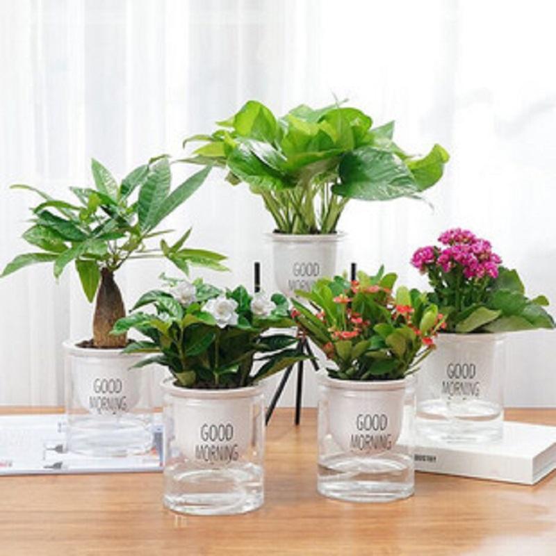 绿植室内盆栽花卉办公室水培植物绿萝发财树好养栀子花多肉虎皮兰